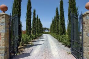 Tuscany tree lined road