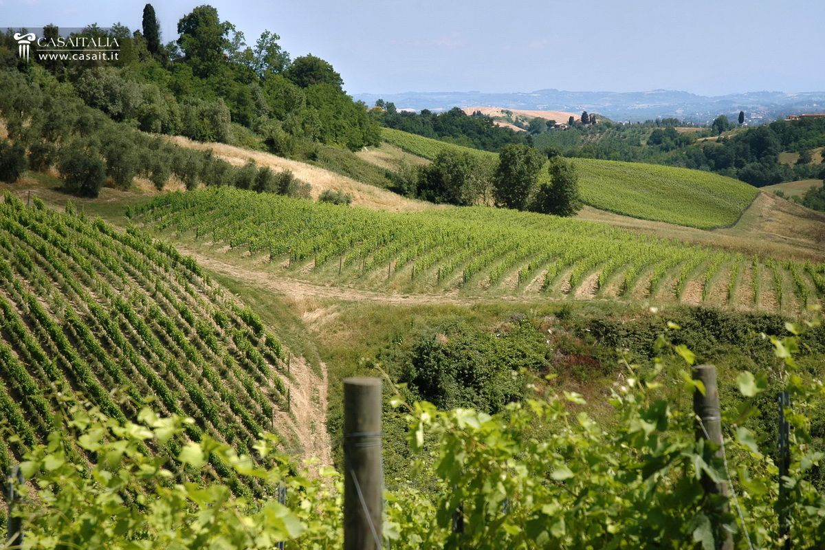 Tuscany - Chianti DOCG vineyard and winery for sale