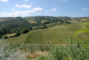 Tuscany - Florence - Chianti winery for sale
