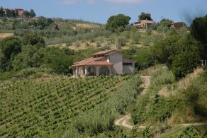 Tuscany - Florence - Chianti vineyard for sale