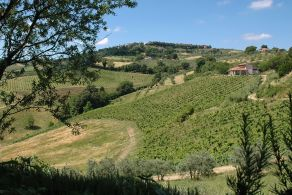 Tuscany - Chianti DOCG wine farm and winery for sale