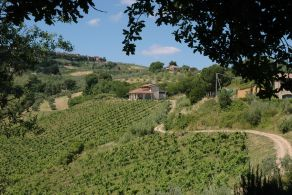 Tuscany - Florence - Winery for sale