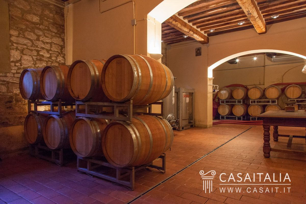 Vineyard for sale in Tuscany - Val d'Orcia