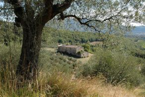 Farmhouse with olive grove for sale between Perugia and the Lake Trasimeno