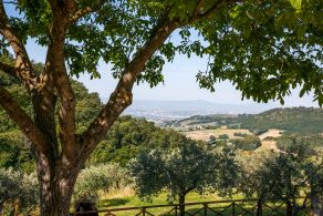 Assisi - Holidays farm for sale