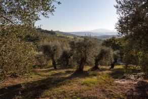 Country house with olive grove and vineyard for sale in Umbria